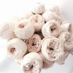 Image about flowers in Random by Azuura on We Heart It Flowers Nature, My Flower, Beautiful Flowers, Peonies And Hydrangeas, White Peonies, Bloom, Luxury Flowers, No Rain, Flower Aesthetic