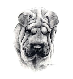 SHAR PEI Dog Pencil Drawing Art Print Signed by Artist DJ Rogers by k9artgallery on Etsy https://www.etsy.com/listing/11553310/shar-pei-dog-pencil-drawing-art-print