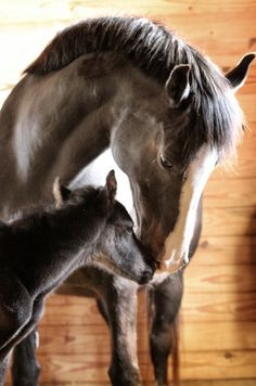Attentive mare with foal