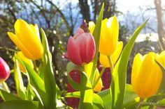Ostern, Heimat und mehr - unser dreizehntes Wochenende 2016