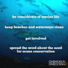 10 Ways to Help Save the Ocean   One World One Ocean