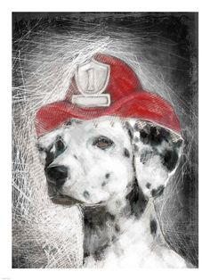 Firefighter Dalmation