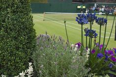Wimbledon is the most famous tennis tournament in the world. Tennis Tournaments, Tennis Players, Wimbledon Tennis, History Of England, Lawn Tennis, British Summer, Tennis Championships, The Spectator, Wedding Humor