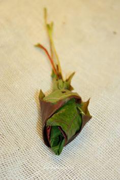 Suvikukkasia: Ruusuja lehdistä