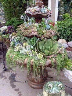 Broken fountain used as a succulent garden
