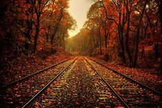 A railway in Autumn.