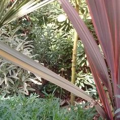 Create a breathtaking and exotic tropical plant filled garden that will survive the UK climate. Tropical Plants Uk, Small Tropical Gardens, Tropical Landscaping, Garden Border Plants, Garden Borders, Planting, Gardening, Large Plants, Water Features