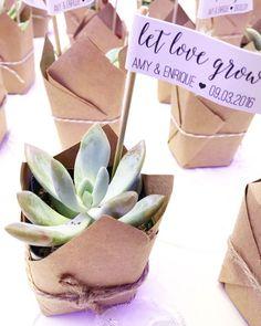 """Let Love Grow"" Succulent Wedding Favors | Dreamery Events"