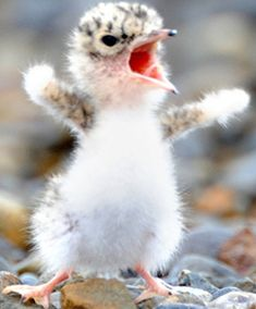 """No guts, no glory. Get guts!"" from Little Tern"