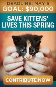 Every spring, well-meaning people bring newborn kittens into shelters, where nearly ALL of them will be killed. Please help save them by donating by May 5th to Alley Cat Allies: https://secure3.convio.net/alley/site/SPageServer?pagename=donatenow