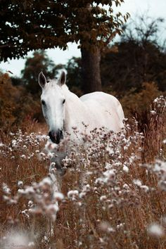 Horse in a snow flower field