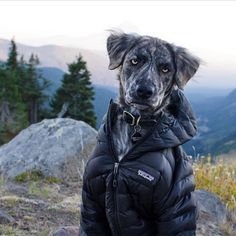 """Caption this picture from the dogs perspective in 5 words or less. #campingwithdogs @laurenhowlandphoto"""
