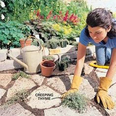 to Build a Stone Path building a patio [with creeping thyme] One of my favorite ground covers!building a patio [with creeping thyme] One of my favorite ground covers! Lawn And Garden, Garden Paths, Garden Landscaping, Building A Patio, Flagstone Path, Ground Cover Plants, Garden Structures, Outdoor Projects, Shade Garden