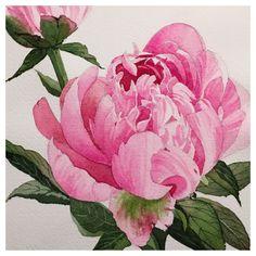 Son Do Watercolor, Peonies