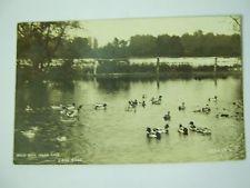 RPPC, 1910, WILD DUCKS LAKE RIDGE, INDIAN LAKE, OHIO