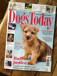 April's cover. 2015. Ruby is a Norfolk Terrier puppy.  Shot in my studio. (UK)