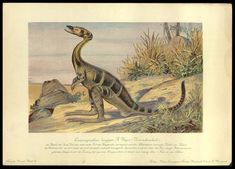 Compsognathus - Early Prehistoric Animal and Dinosaur Pictures