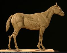 Google Image Result for http://gscept.com/images/gallery/Sculpture/Fredrik_Persson_horse_ecorche_muscle.jpg