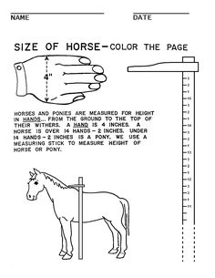 booklet pg 4 - How to Measure a Horse. The rest of this workbook can be found at; http://www.pinterest.com/HorseInterests/illustrations-handouts/