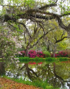 Brookgreen Gardens near Murrell's Inlet, SC. Breathtaking, well worth a trip.