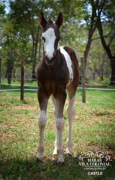 Young Horse - So Pretty !