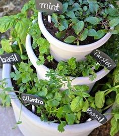 DIY Ideas to Beautify Your Backyard (Without Breaking the Bank!) Add dimension to our backyard by stacking planters to create a tiered herb garden.Add dimension to our backyard by stacking planters to create a tiered herb garden. Backyard Projects, Garden Projects, Backyard Ideas, Diy Projects, Project Ideas, Balcony Ideas, Spring Projects, Modern Backyard, Large Backyard