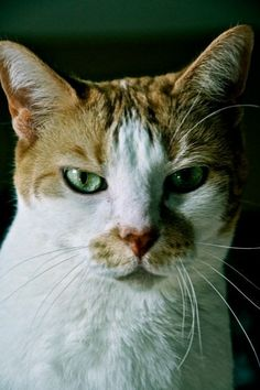 My cat Howard...supermodel...werk!
