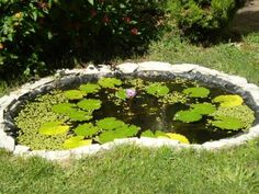 Google Image Result for http://www.jardineria.pro/wp-content/uploads/2010/05/Estanques-en-tu-jard%25C3%25ADn-de-verano.JPG
