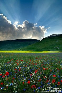 Wild Flower Meadow - red, white and blue