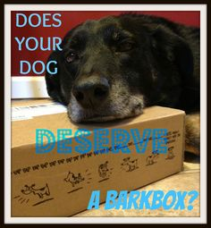 Bear and Scooter LOVE BarkBox!! Your dog will too- click through to order and get a discount too!