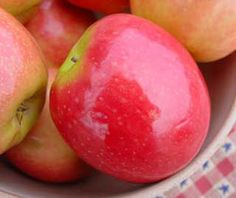 The Pink Lady® apple tree bears a divine dessert apple. Bursting with sweet-tart flavor, this late-ripening variety is a real treat fresh and in baked goods.