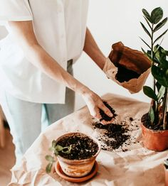 Caring for houseplants can be a tricky thing, but if we have a regular routine it takes the guesswork out of the equation and we can have happy, healthy, and thriving plant babies in no time! So here are some tips to get your indoor jungle thriving! Plant Health, House Plant Care, Happy Healthy, Cacti And Succulents, Houseplants, Indoor Plants, Equation, Pots, Routine
