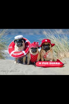 In pictures: Meet three pugs who love fancy dress