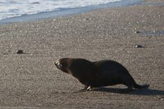 Eighty sick and dead endangered fur seals have washed up on California's coast, likely as a result of warming ocean temperatures. Green infrastructure, such as plants along the coast, could help ensure the seals' survival by helping to cool the ocean. Urge California officials to implement this plan to help save these beautiful creatures.