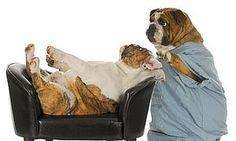 ¿Psicología canina? Aprende más en http://animales-perdidos.com/blog/psicologia-canina-y-psicologia-humana/
