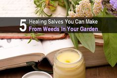 Most people look at the weeds in their garden and see nothing but annoying green plants. Other people look at the weeds in their garden and see potential medicines. There are so many ways to use medicinal herbs: soups, teas, poultices, tinctures, and even in steam. The focus of this article is on salves. In this article from Homespun Seasonal Living, Christine shares recipes for five types of salves: Salve for Bruising and Cuts - Made from olive oil, yarrow leaves, arnica flower petals, and…