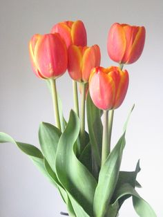 Orange Tulips III -stock- by BiggieShorty on DeviantArt Tulips Flowers, Flowers Nature, Exotic Flowers, Beautiful Flowers, Florist Logo, Birthday Frames, Deco Floral, Flower Photos, Botanical Art