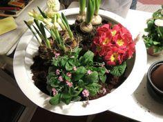 Frühliungsblüher, ach wie schön! Lasst uns in den Garten gehn #Pflanzen #selbermachen #garten #blumen
