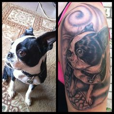 Photo] The Tattoo Featuring Pickles The Boston Terrier Is Finished ...