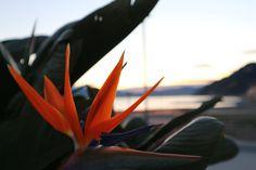 Scattata con la mia Canon, senza filtri ne modifiche #comeandsee #nofilter #Canon #flower #nature