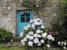 Brittany France blue door and hydrangeas
