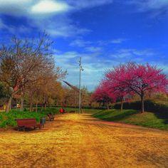 The spring is comoNo