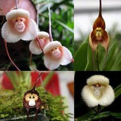 Aren't these orchids extraordinary ?!!