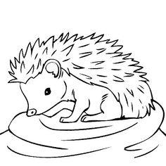 Hedgehog outline