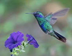 Flying Jewel by Kathy Reeves