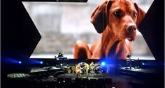 Depeche Mode, Precious and Dogs > http://www.montrealdogblog.com/17843/depeche-mode-precious-dogs/