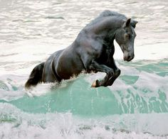 Black horse jumping the wave. Black horse jumping the wave. All The Pretty Horses, Beautiful Horses, Animals Beautiful, Simply Beautiful, Black Horses, Wild Horses, Dark Horse, Animals And Pets, Cute Animals