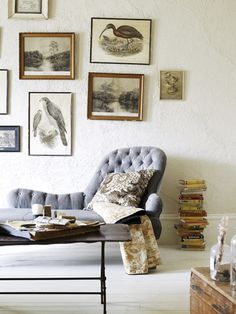 ornithological prints in a portuguese home styled by amanda henderson-marks