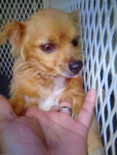 DELL located in Delano, CA has 3 days Left to Live. Adopt him now!