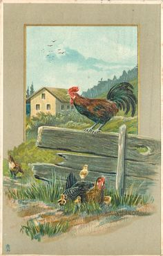 rooster, hen and chicks, broken fence
